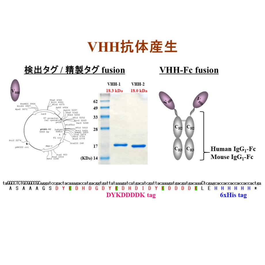 リコンビナントVHH抗体取得